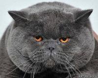 Фотка строгий кот